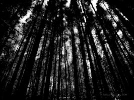 Into the woods by TebPixels