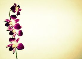 Orchid 1 bg by TwinkleTinytot