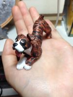 Brindle Boxer (for sale) by Wolfs-Hybrid