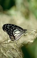 Butterfly - 1 by MSlygh