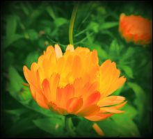 Yellow Flower For Athina by surrealistic-gloom