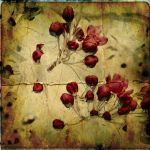 CrabApple01 by horstdesign