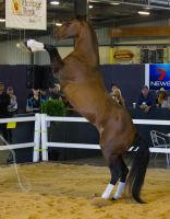 STOCK - 2014 Total Equine Expo-16 by fillyrox