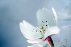blossoming by HideTheDetails