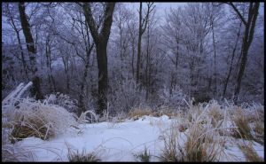 Winter on Pine Mountain by TRBPhotographyLLC
