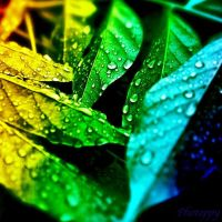 Rainbow Leaves by PoppyHunter