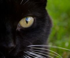 Cat's Eye - Stock by spilt-sugar