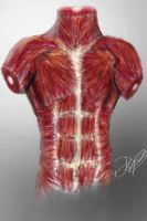 Human anatomy _male_ _Chest_ by FrostyBlade