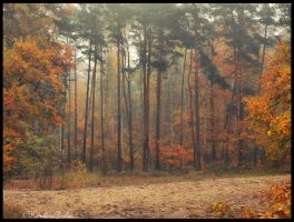 Autumn in the forest_8 by carolinbie
