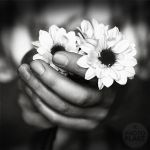 little things by photoflake