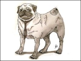 Pugsly the dog by Shadowprey