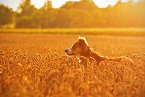 Summer is golden by Fiorildi