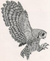 Screech Owl, pen and ink by RamageArt