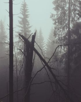 Dark misty woods by Noirerora