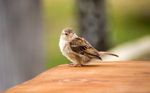 Sparrow Surprise by ARC-Photographic
