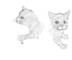 Kitten Sketches by Alisha-town