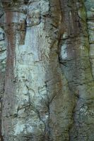 Bark texture_023 by BlokkStox