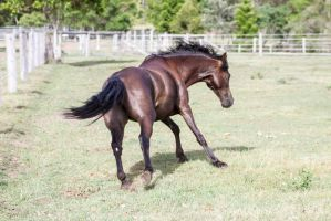 Dn pony launchig off in canter blur view by Chunga-Stock
