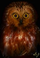Hoot by Lashington