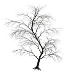 Dark Trees PNG Stock 01 by Jumpfer-Stock