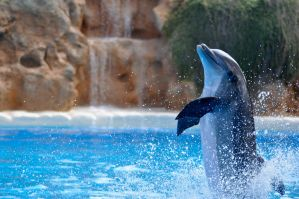 Dolphin by Klunder