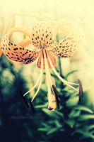 Tiger Lily by MidnightDaisyStudio