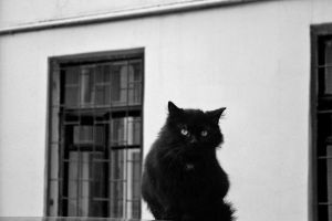 Black Cat 4 by Arina1