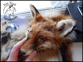 WIP Fox Soft Mount by EternalEmporium