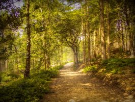 Path through forest STOCK by needanewname