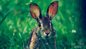 Rabbit Portrait by OneOfLifesMysteries