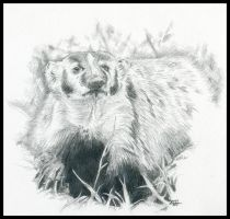 Badger by M-Everham