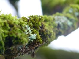 Macro- Moss by gordon131