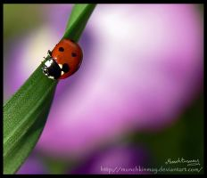 Lovely little ladybird by Munchkinmay