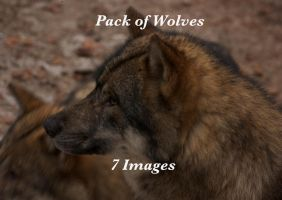 pack of wolves by bookscorpion