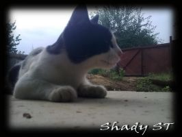 my cat by photographer-ST