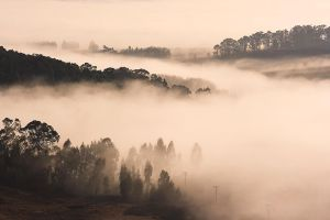 Mist by carlosthe