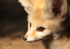 Fennec by The-Underwriter