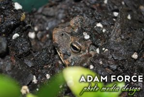 The Guardian of My Basil Plant. by adamforce