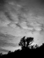 BW hilltop silhouette by jac0ba