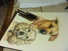 WIP Pet portrait commission by NatsumeWolf