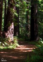 Through the Redwoods by Deirdre-T