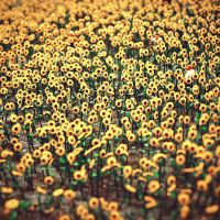 no real sunflowers by vanerich