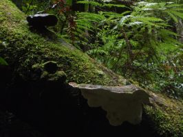 Fungi in the canyon by Weatbix