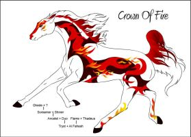 CH Crown Of Fire by Everland-Stables