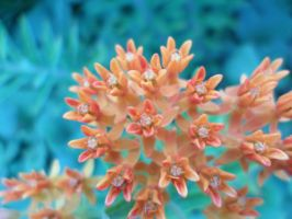 Small, Orange Flowers by SweetHeart516-CP