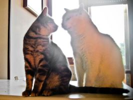 cats A kiss by hermio