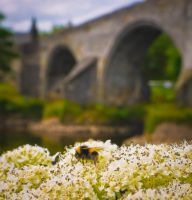 Stirling Bee by BusterBrownBB