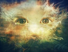 In the Eye of the Son by ashelynn