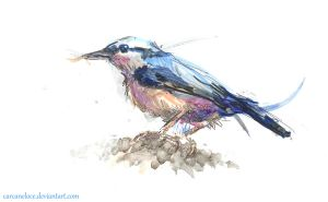Nuthatch by Carcaneloce