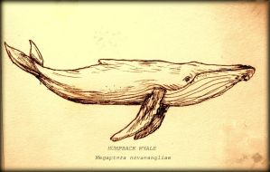 Humpback Whale Card by elicenia